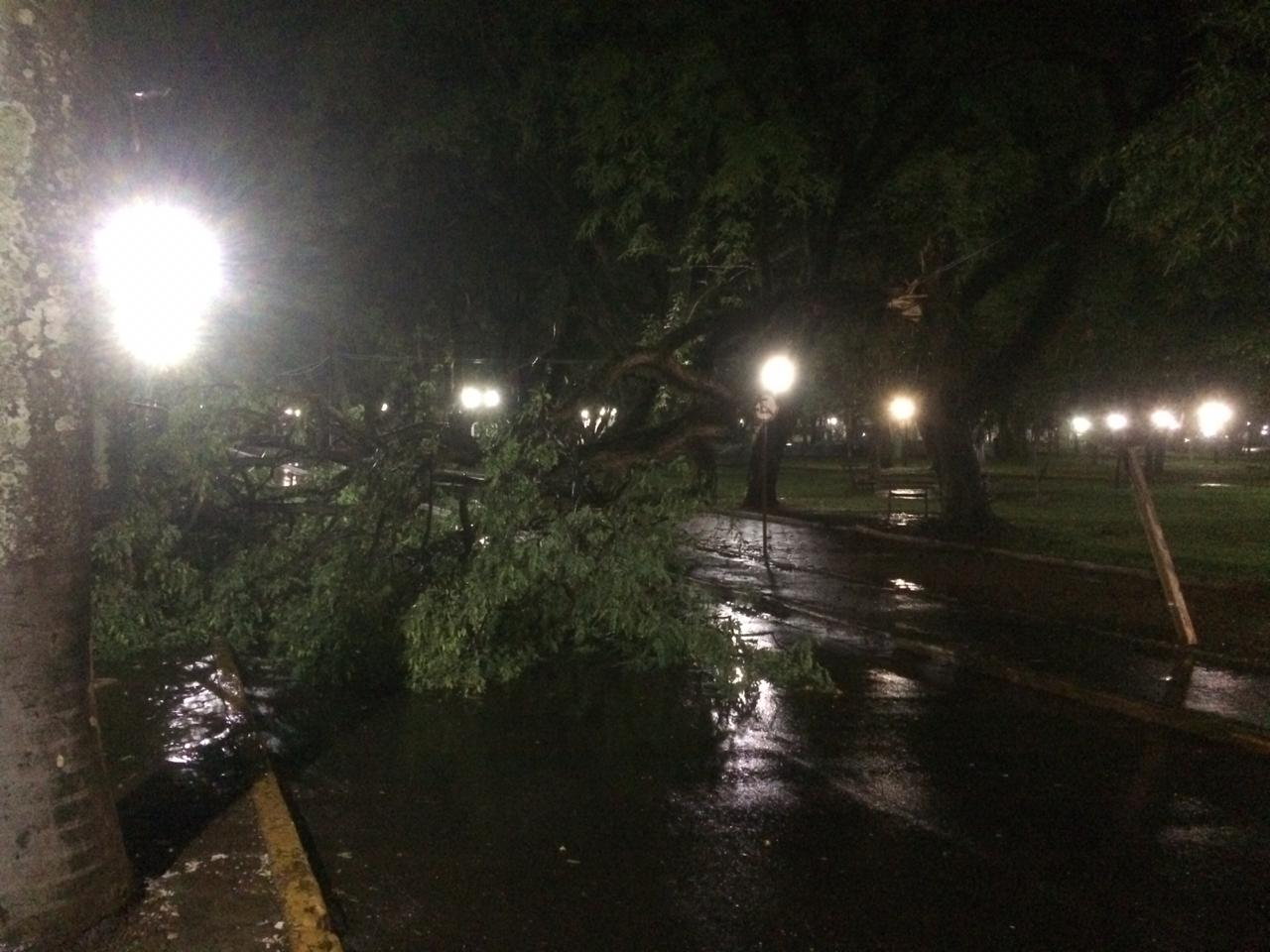 Vento forte derruba árvore na Avenida Maripá em Marechal Rondon - O Presente